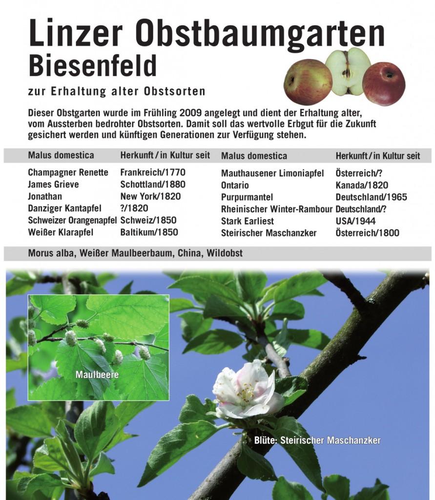 tafel-biesenfeld