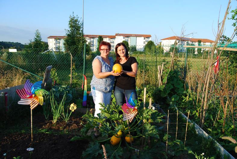 Ernte im Garten Labor in Leonding. Foto: Johanna Klement/urbanfarm